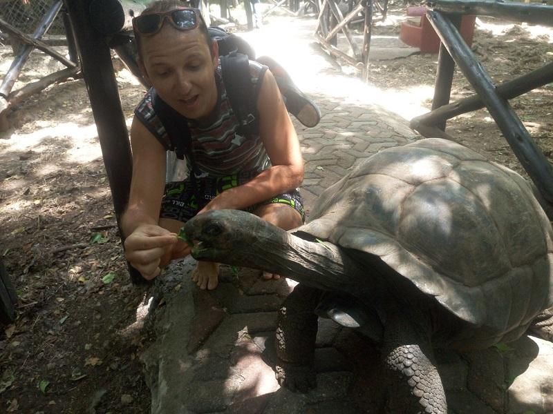 фото занзибар черепаха