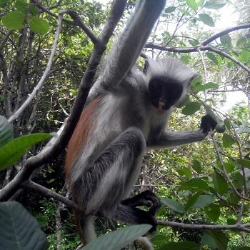 Животный мир Занзибара