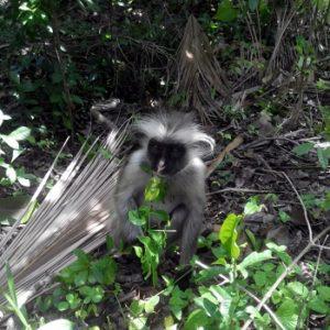 Чвака бэй парк обезьян