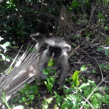 Жозани форест (парк обезьян)