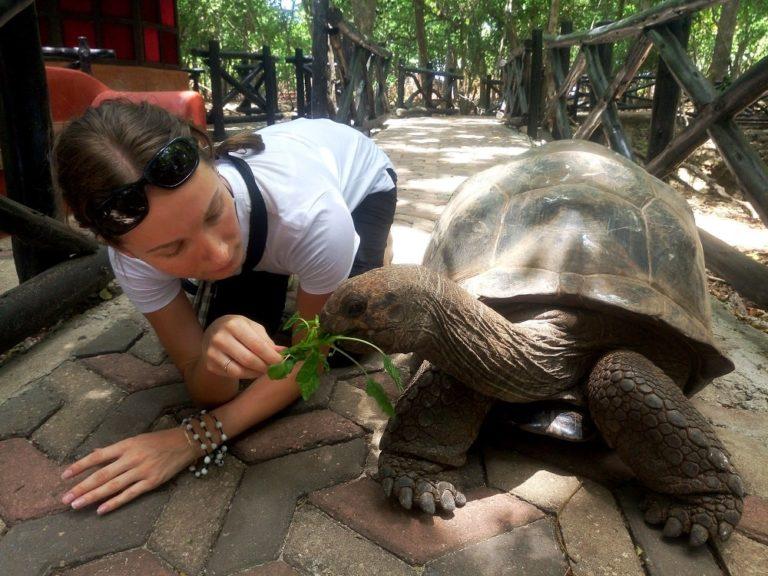 Можно кормить гиганстких черепах!