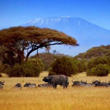 Сафари из Занзибара в Танзанию