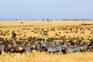 Цены на сафари из Занзибара в Танзанию