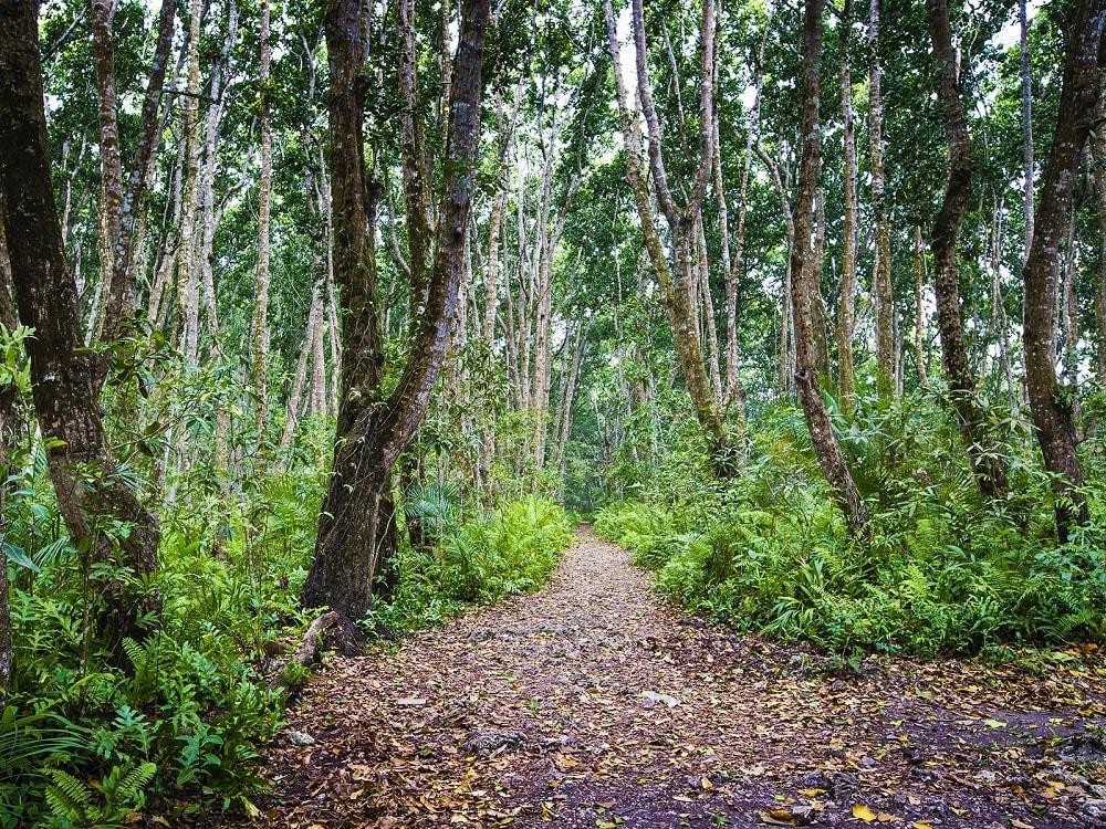 тропический лес на занзибаре