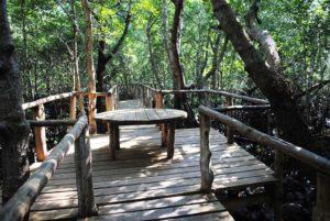 тропинки в парке обезьян занзибар
