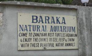 черепахи занзибар нунгви