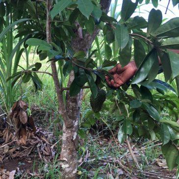 Ферма специй на Занзибаре