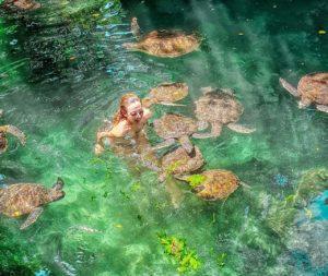 нунгви черепахи аквариум