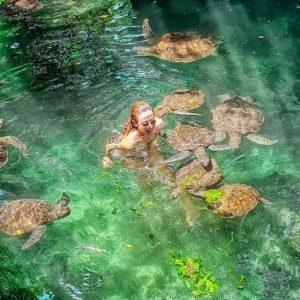 поплавать с черепахами на занзибаре